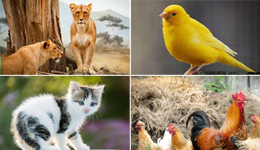 animals_birds_pets_livestocks